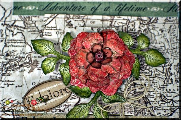 Joann-Larkin-Discover-Flower